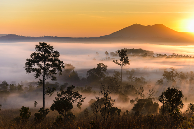 Best places to view the sea of mist in Thailand: Savannah, sea of mist and sunrise seen from Sala Dusita at Thung Salaeng Luang National Park in Phetchabun