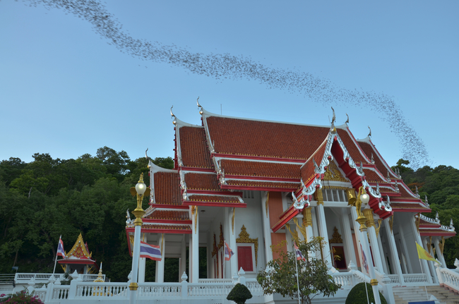 Things to do in Ratchaburi, Thailand: The black flights at Wat Khao Chong Pran