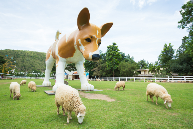 Things to do in Ratchaburi, Thailand: Woof woof, baa baa at The Scenery Vintage Farm