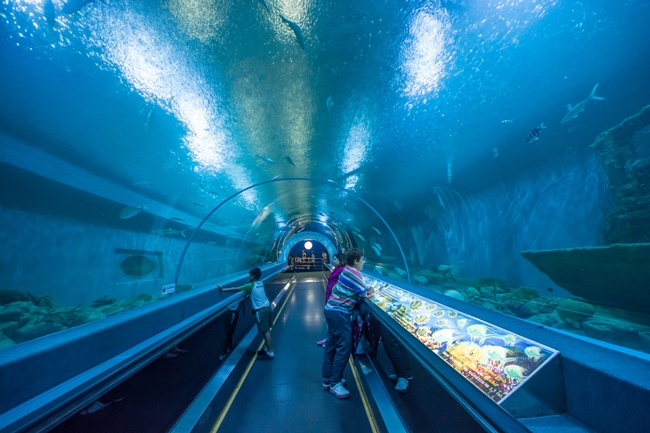 Things to do in Suphan Buri, Thailand: Underwater tunnel at Bueng Chawak