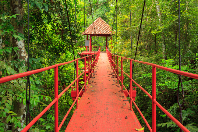 Things to do in Trang, Thailand: Treetop walk at Thung Khai, both relaxing and thrilling...