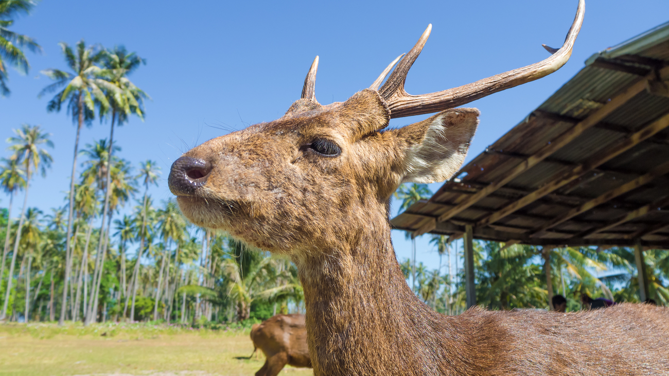 Things to do in Trat, Thailand: The deer island, Koh Kradad