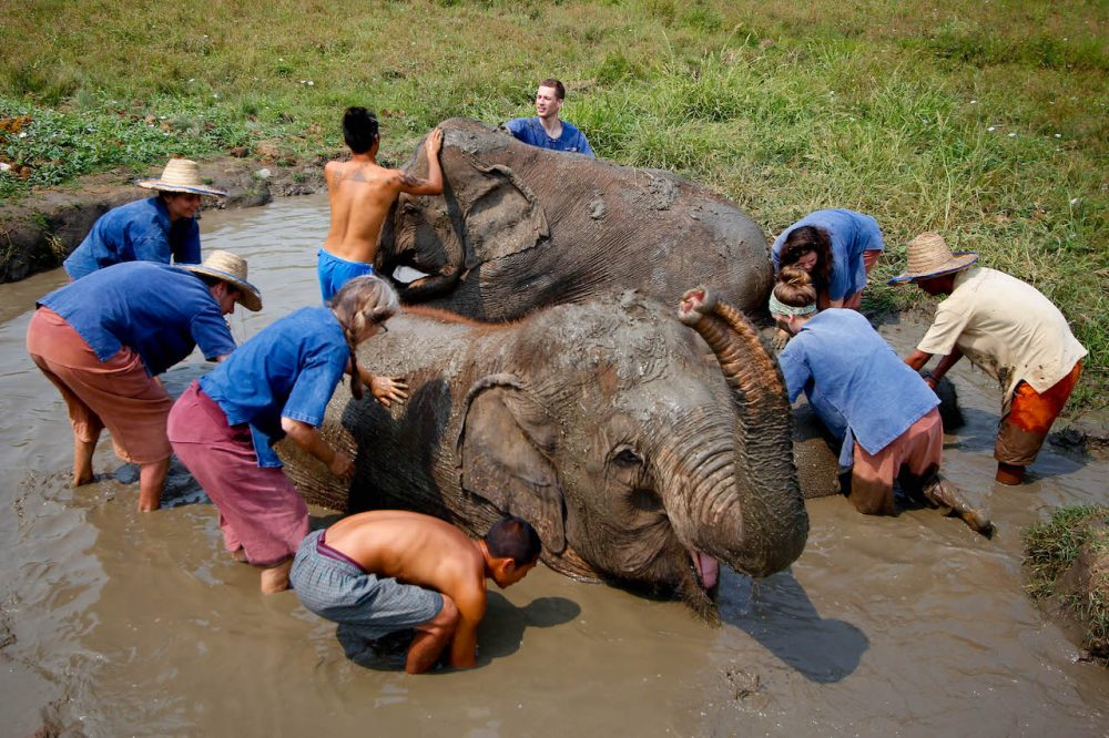 Ethical elephant sanctuary, Chiang Mai