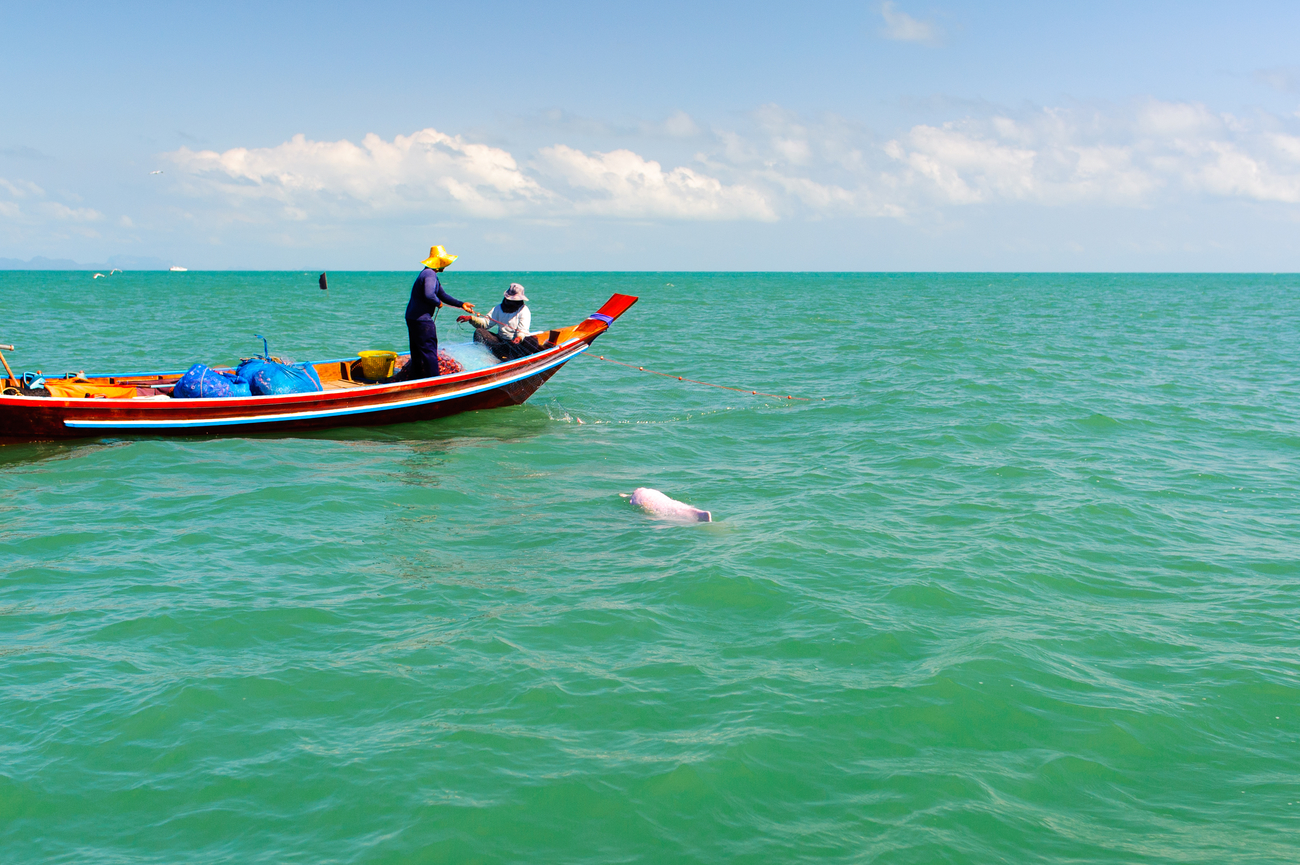 Things to do in Nakhon Si Thammarat, Thailand: See pink in Khanom sea